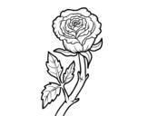 Desenho de Rosa selvagem para colorear