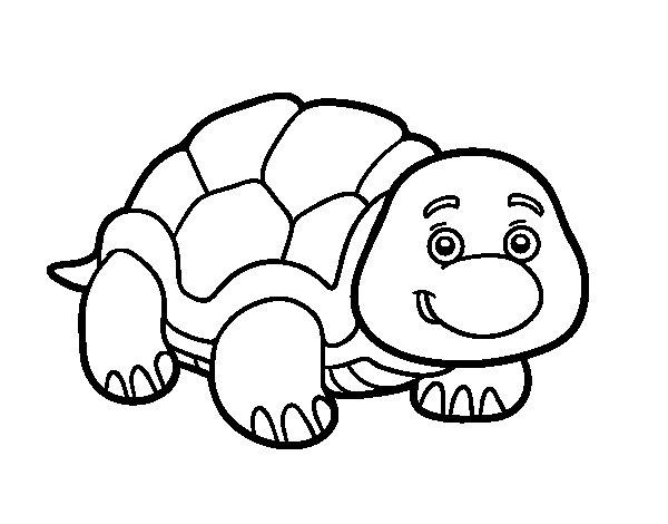Desenho de Tartaruga de terra para Colorir