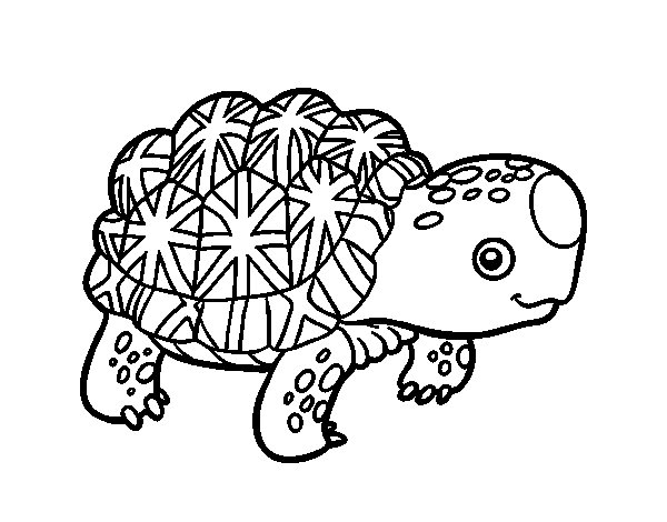 Desenho de Tartaruga estrelada indiana para Colorir