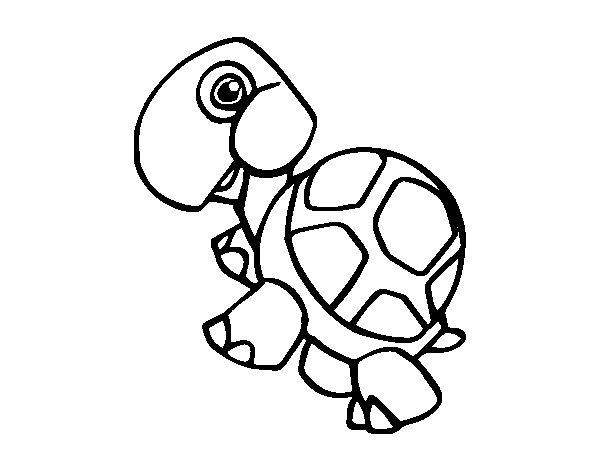 Desenho de Tartaruga terrestre para Colorir