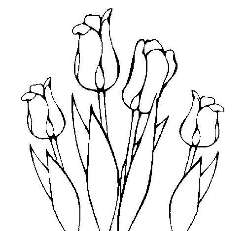 Desenho de Tulipa para Colorir