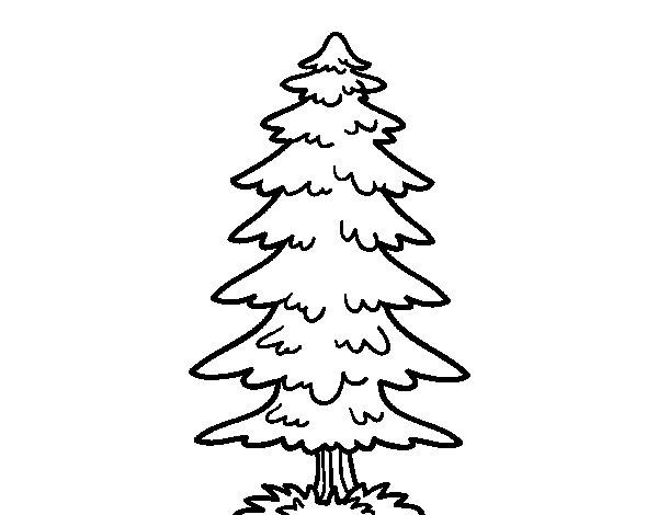 Desenho de Um abeto para Colorir
