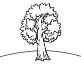 Desenho de Um acer para colorear