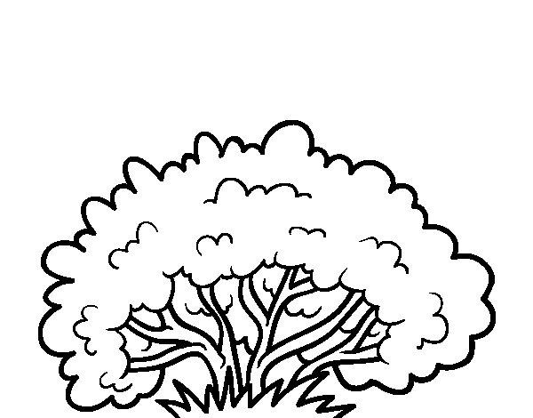 Desenho de Um arbusto para Colorir