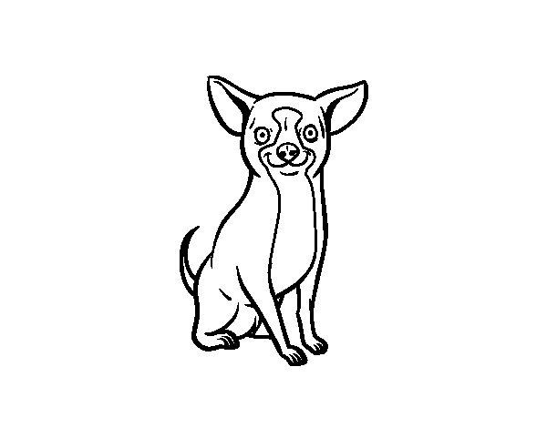 Desenho de Um cão chihuahua para Colorir
