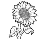 Desenho de Um girassol para colorear