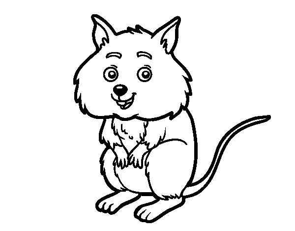 Desenho de Um pequeno criceto para Colorir
