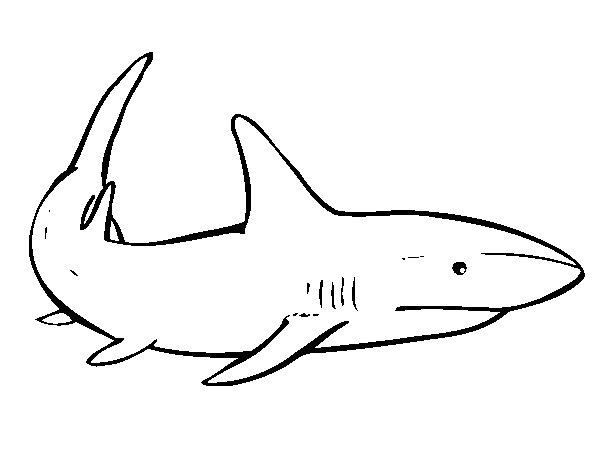Desenho de Um tubarão nadando para Colorir