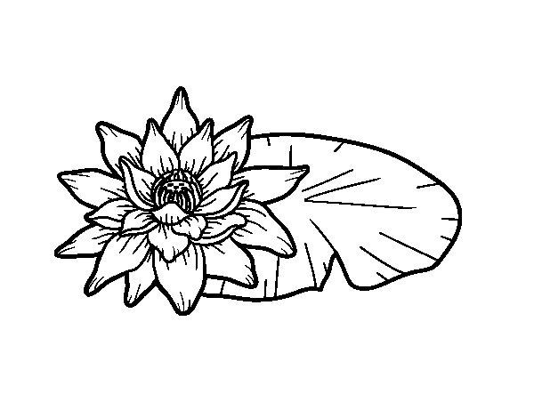 Desenho de Uma flor de lotus para Colorir