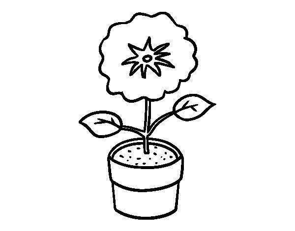 Desenho de Uma flor de primavera para Colorir