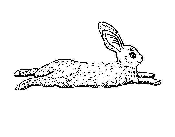 Desenho de Uma lebre para Colorir