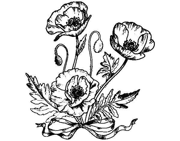 Desenho de Umas papoilas para Colorir