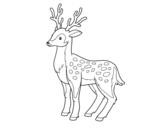 Dibujo de Un cervo novo