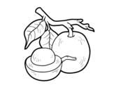 Desenho de Ximenia para colorear