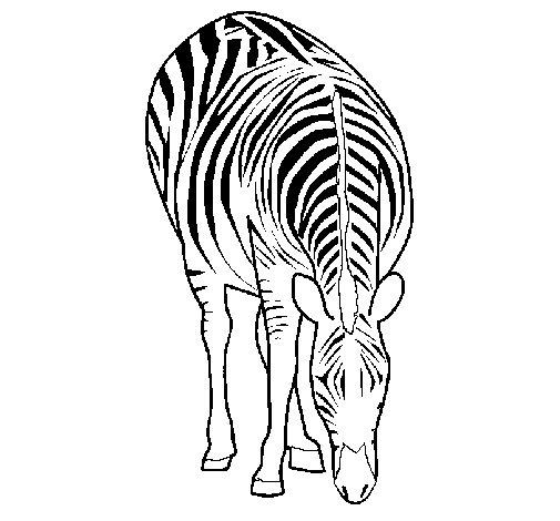 Desenho de Zebra para Colorir