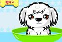 O filhote de cachorro