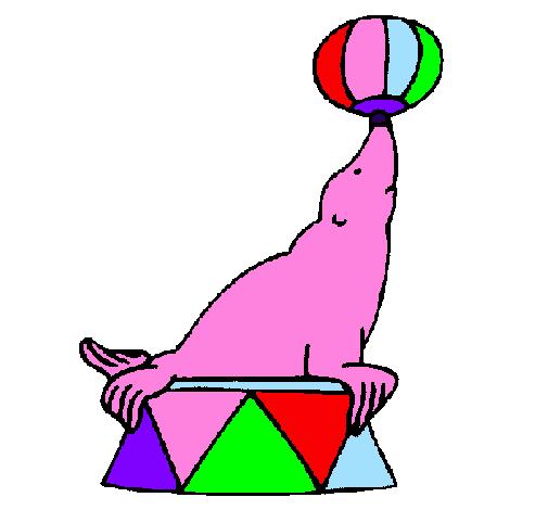 Desenhos De Animais Focas Pintados E Coloridos Melhor Avaliados