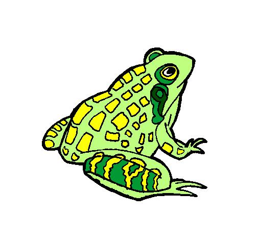 desenhos de animais sapos pintados e coloridos mas visitados pelos