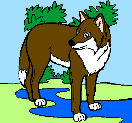 Desenho De Lobo Pintado E Colorido Por Usuario Nao Registrado O