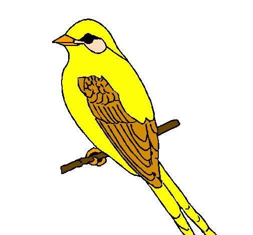 Desenho De Papa Moscas Pintado E Colorido Por Usuario Nao