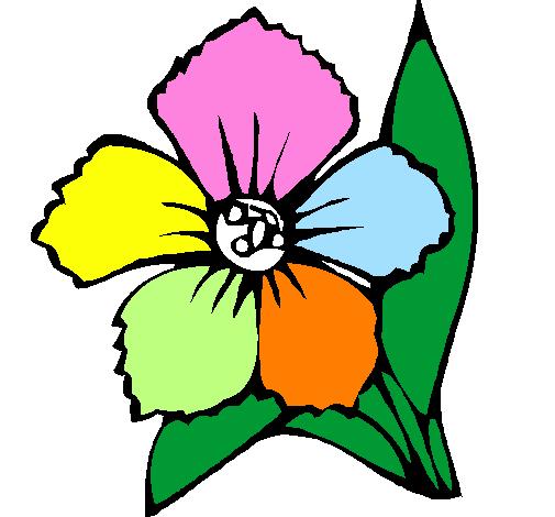 Desenho De Flor Pintado E Colorido Por Usuario Nao Registrado O