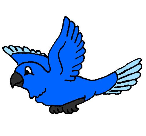 Desenho De Periquito Pintado E Colorido Por Usuario Nao Registrado