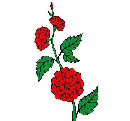 Desenho De Ramo Com Flores Pintado E Colorido Por Usuario Nao
