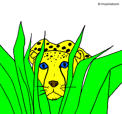 Desenho De Guepardo Pintado E Colorido Por Usuario Nao Registrado