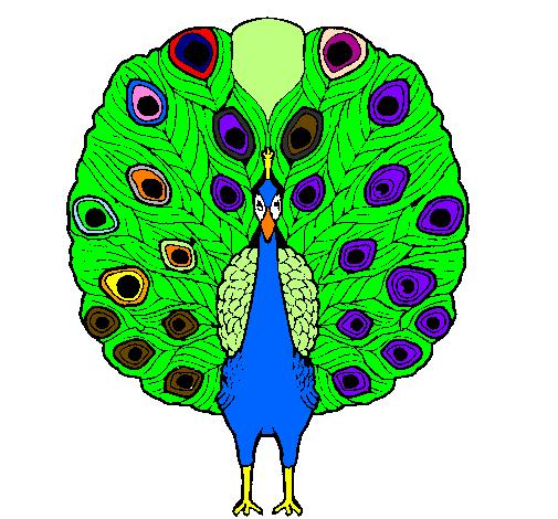Desenho De Pavao Real Pintado E Colorido Por Usuario Nao