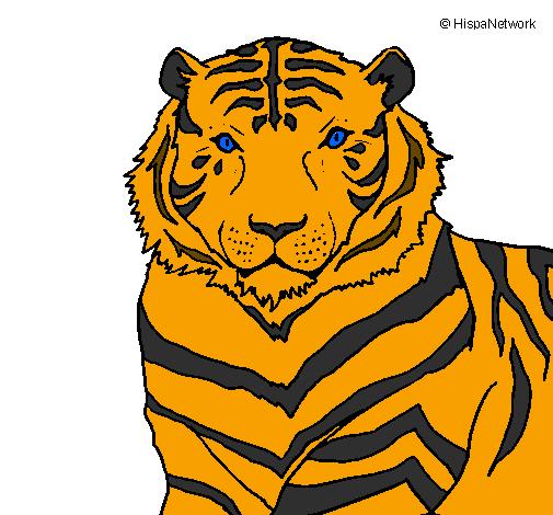 Desenho De Tigre Pintado E Colorido Por Usuario Nao Registrado O