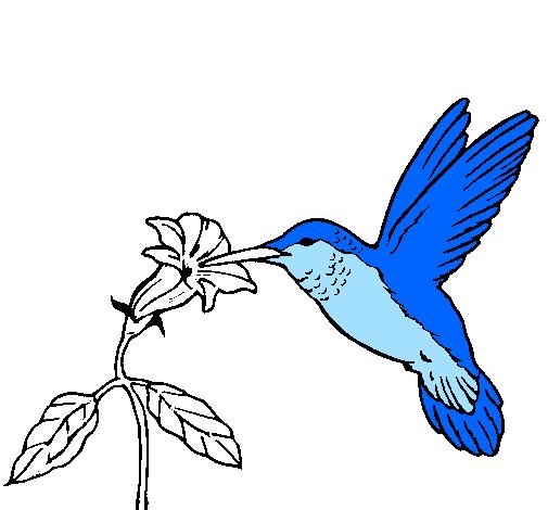 Desenho De Colibri E Uma Flor Pintado E Colorido Por Usuario Nao