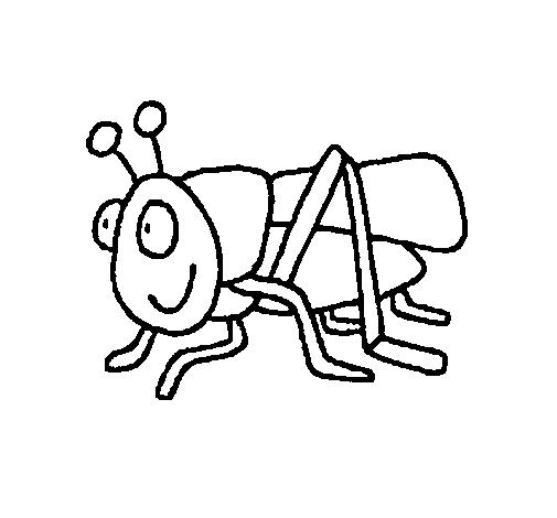 desenhos de animais gafanhotos pintados e coloridos melhor