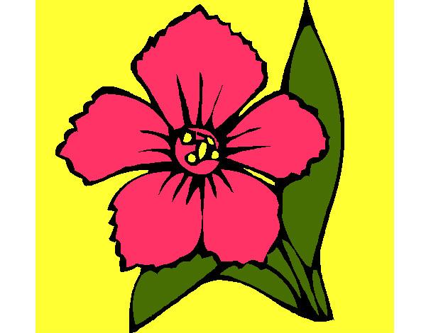 Desenhos De Primavera Para Colorir Colorircom
