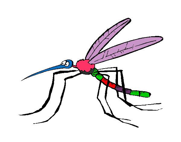 desenhos de mosquitos para colorir colorir com