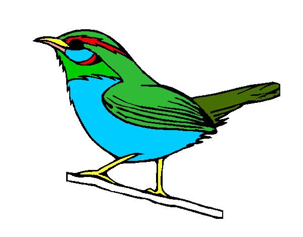 Desenho De Passaro Silvestre Pintado E Colorido Por Guigu O Dia 06