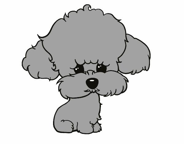 Desenho De Cachorro De Poodle Pintado E Colorido Por Usuario Nao