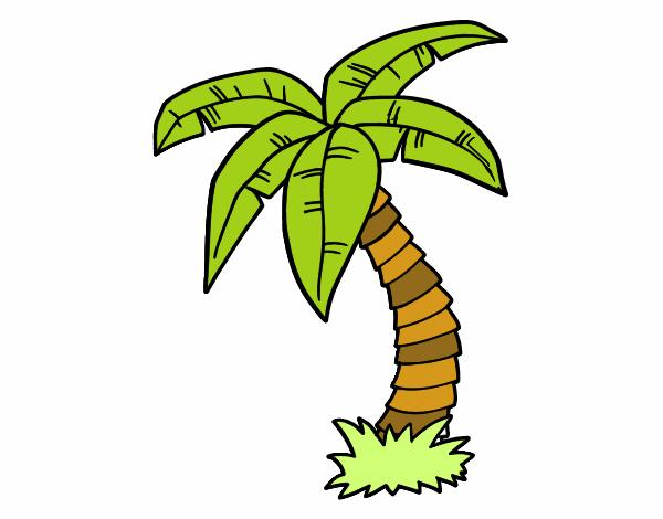 Desenho De Palmeira Pintado E Colorido Por Usuario Nao Registrado
