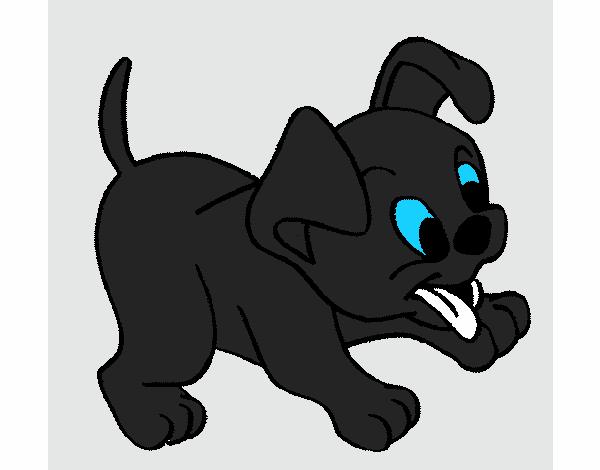 Desenho De Cachorro Gato Pintado E Colorido Por Usuario Nao