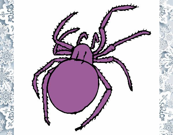 Desenho De Dona Aranha Pintado E Colorido Por Usuario Nao
