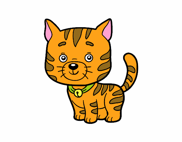 Desenho De Um Gato Domestico Pintado E Colorido Por Ameireles O