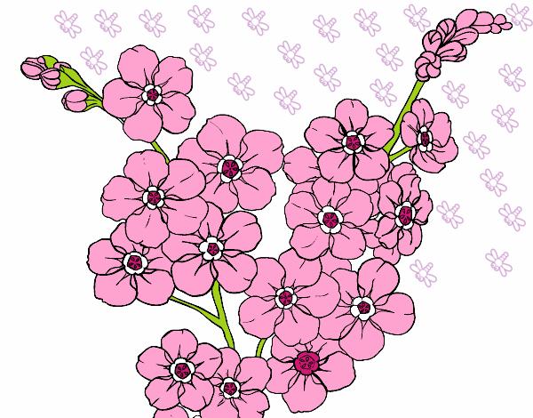 Desenho De S2 Delicadas S2 Pintado E Colorido Por Usuario Nao