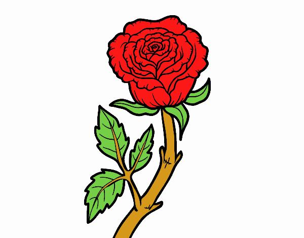Desenho De Rosa Vermelha Pintado E Colorido Por Usuario Nao
