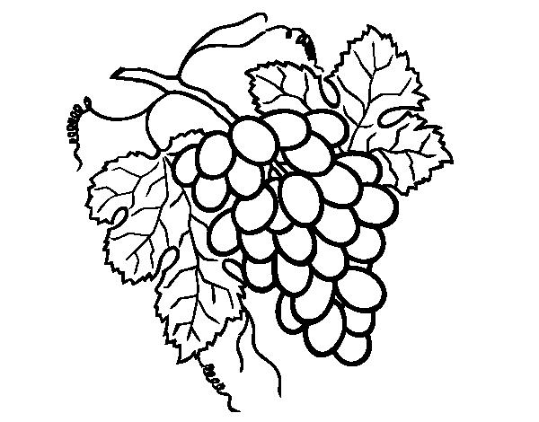 desenho de cacho de uvas para colorir colorir com