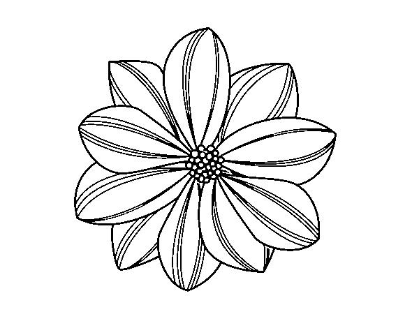 Desenho De Flor De Margarida Para Colorir Colorir Com