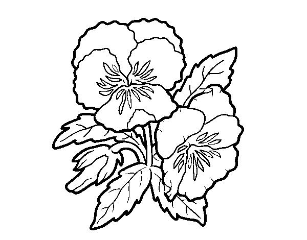 Desenho De Flores De Amor-perfeito Para Colorir