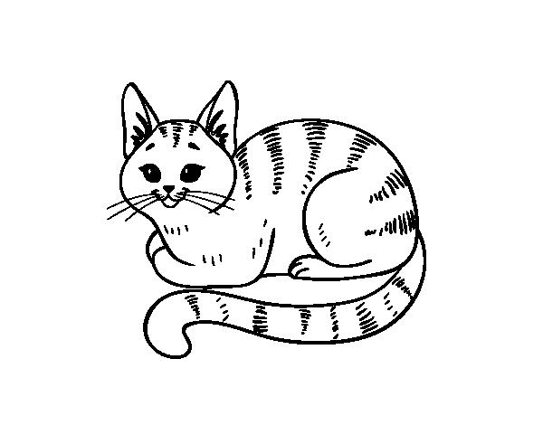 Desenho de Gato novo para Colorir - Colorir.com