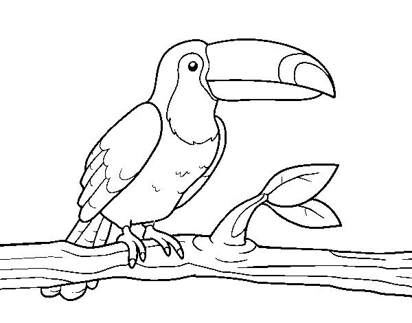 Desenho De O Tucano Para Colorir Colorir Com