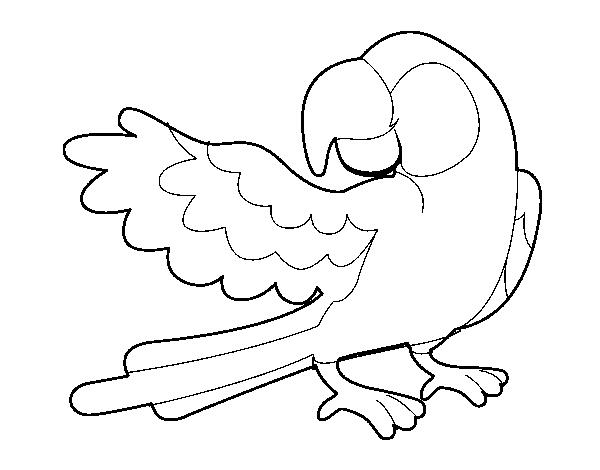 desenho de papagaio abrir a asa para colorir colorir com