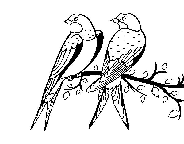 Desenho De Par De Passaros Para Colorir Colorir Com