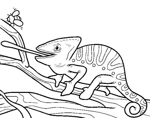 desenho de um camaleão com a língua para fora para colorir colorir com